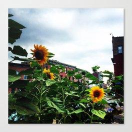 Sunflowers on Main Street - Beacon NY Canvas Print