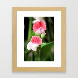 Sweetpea Framed Art Print