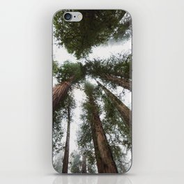 Redwood Portal - nature photography iPhone Skin