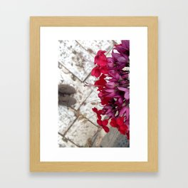 Jaffa Blooms #2 Framed Art Print