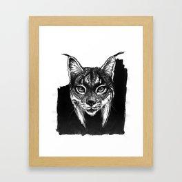 Lynx bobcat Framed Art Print
