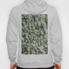 tiny succulents iii Hoody