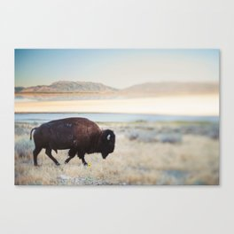 The Anonymous Buffalo Canvas Print