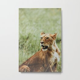 Serengeti National Park, Tanzania XIII Metal Print