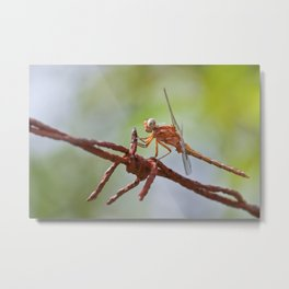 Nature in pastel shades Metal Print