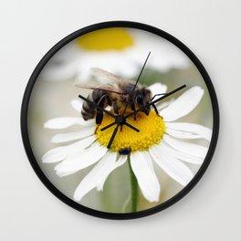 Biene auf der Kamille Wiese Wall Clock