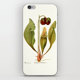 Sarracenia Purpurea Vintage Illustration  iPhone Skin