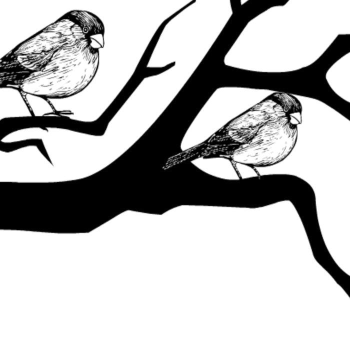 Family birds Leggings