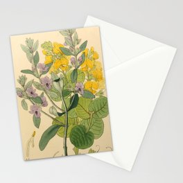 A. ATELANDRA INCANA B. GASTR0L03IUM CORDATUM Stationery Cards