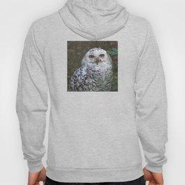 Dream Creatures, Snowy Owl, DeepDream Hoody