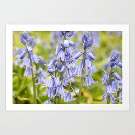 Woodland Bluebells Art Print