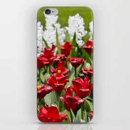 Red Tulip Field with White Hyacinth Flowers Blooming in the Background in Amsterdam, Netherlands iPhone Skin