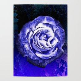 Somber Rose Poster
