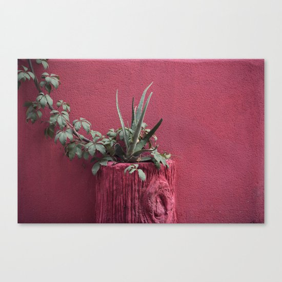 Pink and plant Canvas Print