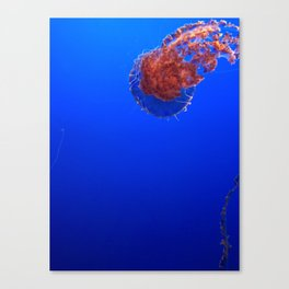 stinging nettle jellyfish Canvas Print