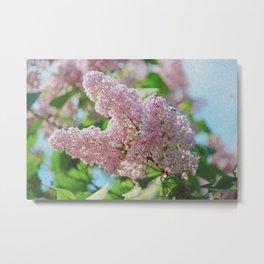 Pink lilaс Metal Print