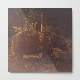 Brown bear III Metal Print