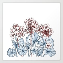 Pelargonium Art Print