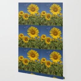 SUNFLOWERS 2 Wallpaper