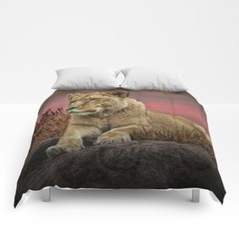 African Female Lion in the Grass at Sunset Comforters