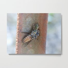 spider and horsefly Metal Print