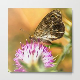 Wall Brown Butterfly On Thistle Metal Print