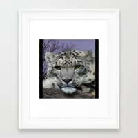 snow leopard Framed Art Prints featuring Snow Leopard by SwanniePhotoArt