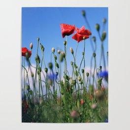 poppy flower no10 Poster