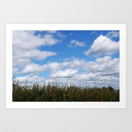 "Corn field in autumn with ""popcorn"" clouds Art Print"