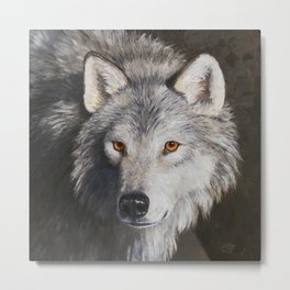 Gray Wolf Face Metal Print