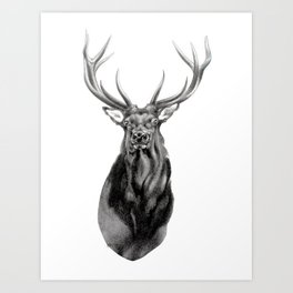 Bull Elk Encounter Art Print