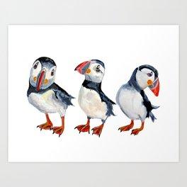 puffins Art Print