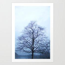 Bare Tree in a Blue Fog Art Print