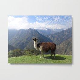 Inca Trail Llama, Peru Metal Print