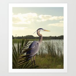 Great Blue Heron in the Bulrushes Art Print