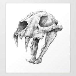 Dinictis, The 'False Sabertooth Cat' skull | Graphite Pencil Art Art Print