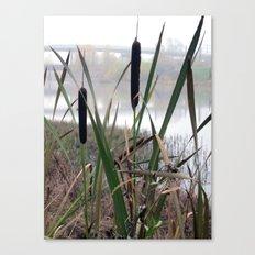 Reeds Seeds Canvas Print