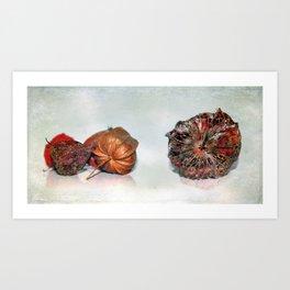 Physalis Part VIIII. Art Print