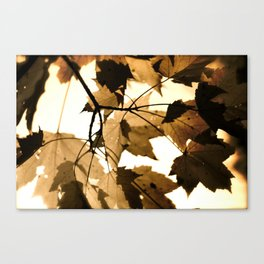 Leave it out. Canvas Print