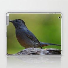 Gray Catbird Laptop & iPad Skin