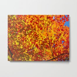 Blazing Fall Canopy Metal Print