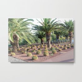 Tropical landcsape with cactus and Palm trees Metal Print