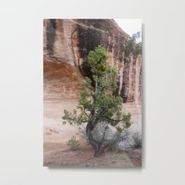 Desert Soloist Metal Print