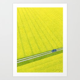 Yellow flower field Art Print