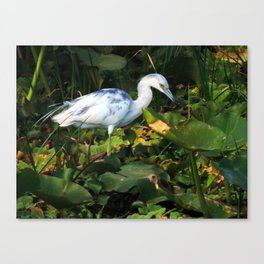 society6.......prints, and photos on t-shirts, mugs, framed prints, throw pillows, clocks, and rugs  Canvas Print