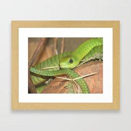 Green viper Framed Art Print