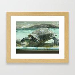 Aquatic life in Colorado Framed Art Print