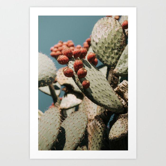prickly pear iii Art Print