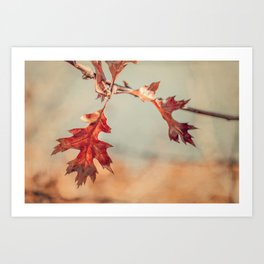 Cape Cod Oak Leaves in Autumn Art Print