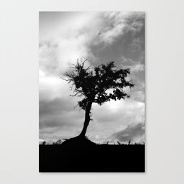 Tree 2202 Canvas Print